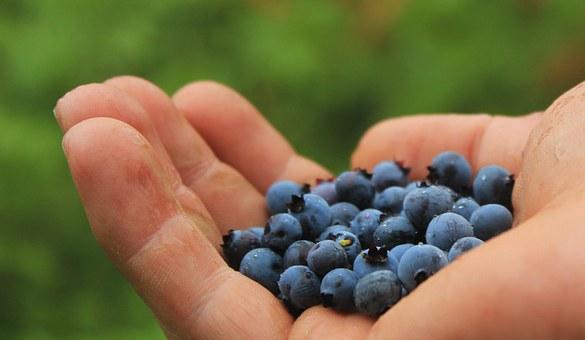 blueberries-801571__340