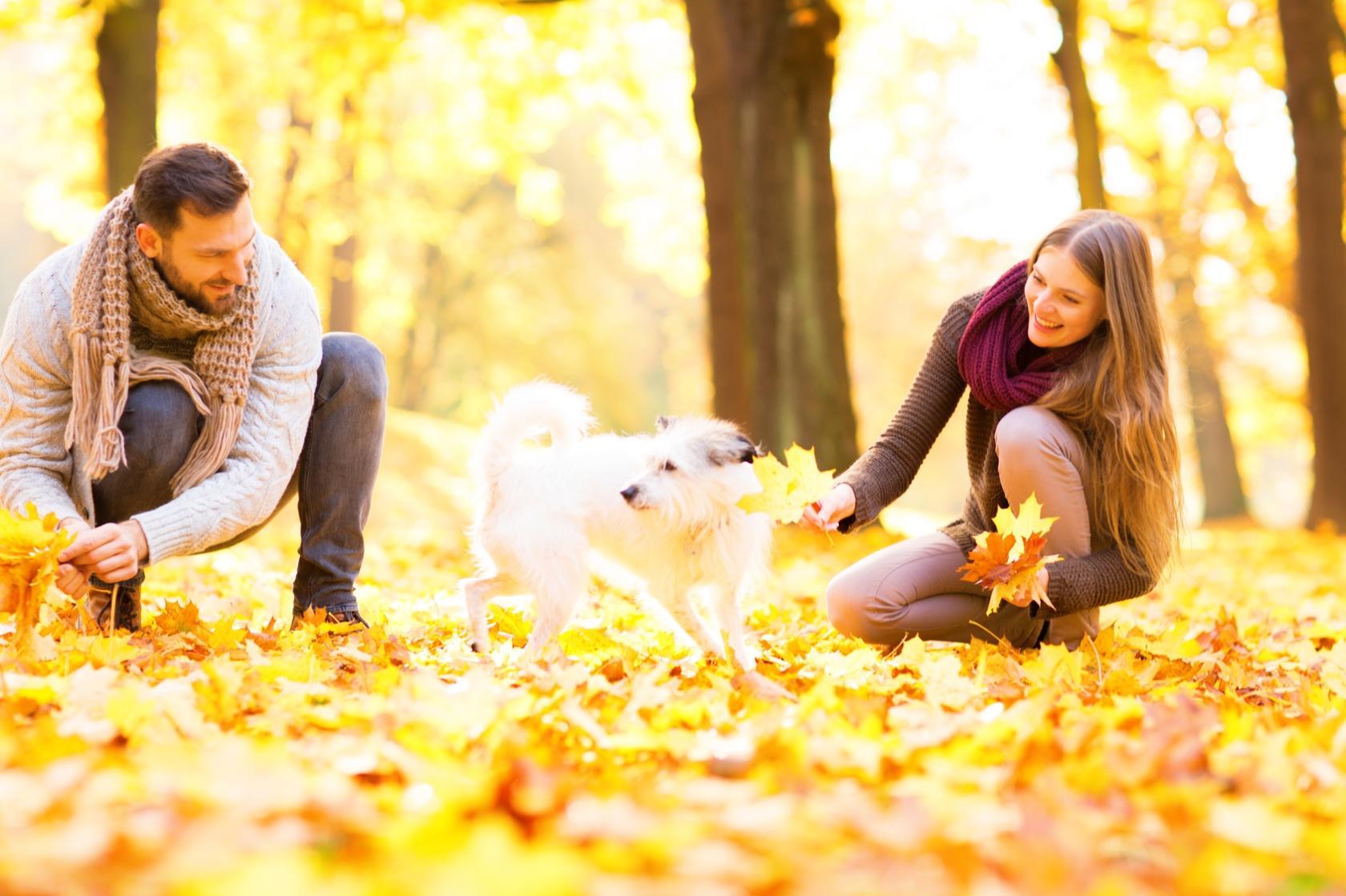 Prchen mit dem Hund beim spielen