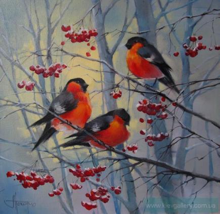 talvi linnut