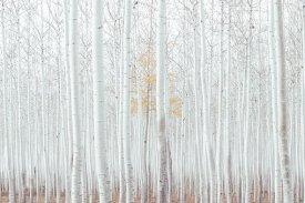 white-2565885__340.jpg